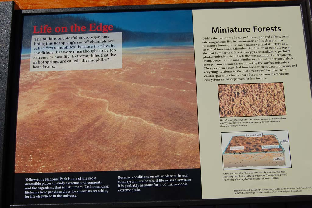 information about the microorganisms living in the Grand Prismatic Spring