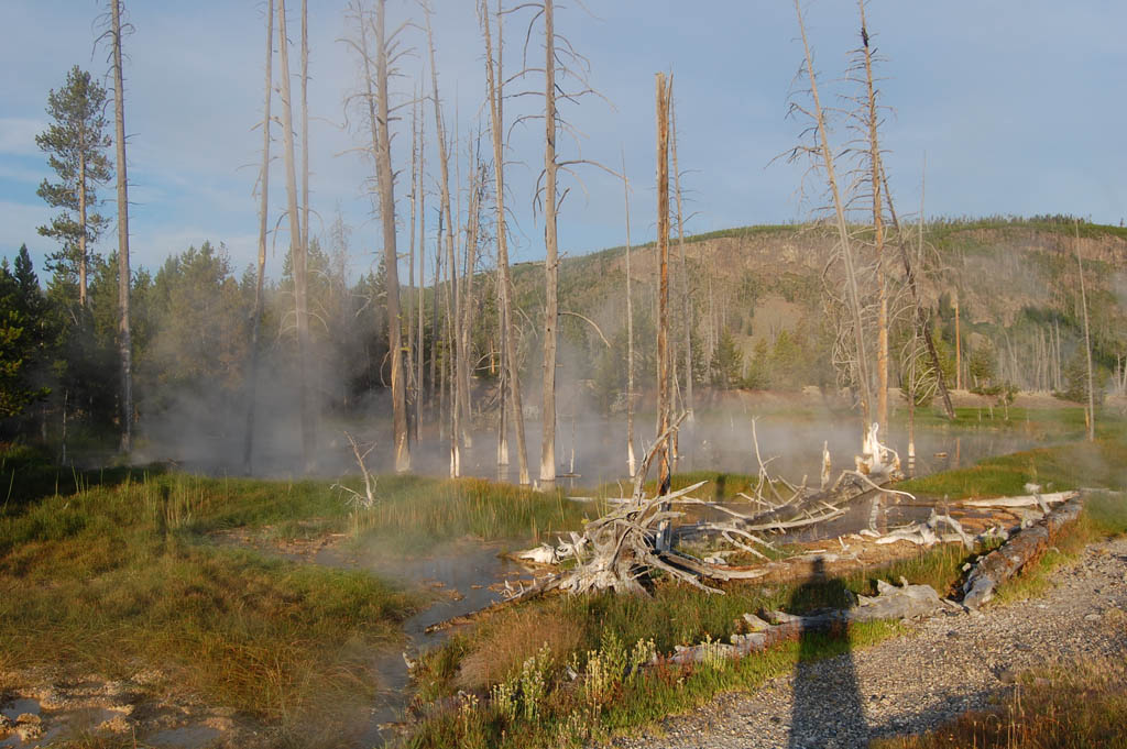 tiny hot spring near Old Faithful Village claims the lives of nearby trees