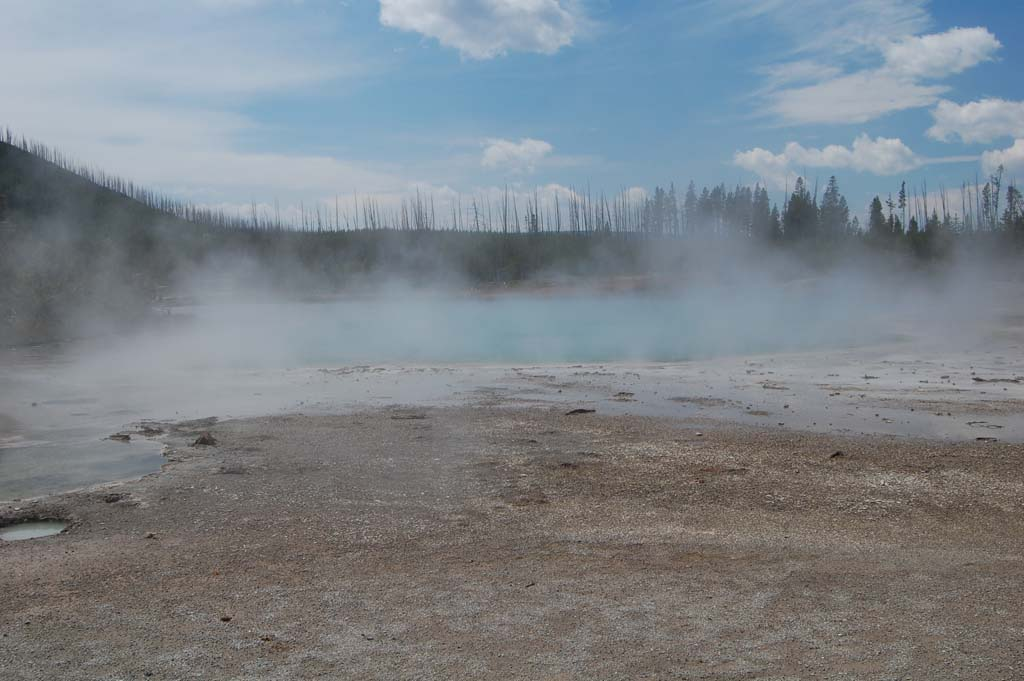 hot spring threatens nearby trees in the Norris Geyser Basin