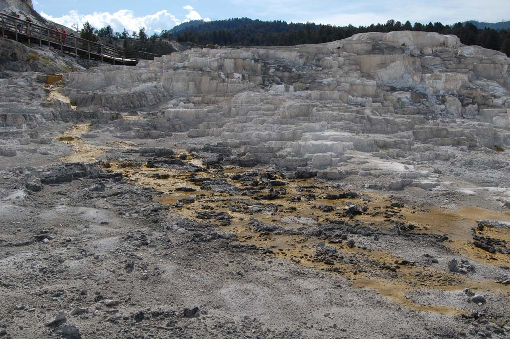 Minerva terrace at the Mammoth Hot Springs travertine terraces