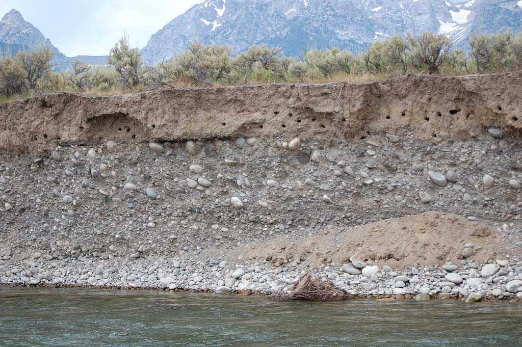 swallows build their nests by burrowing into the sides of this bank on the Snake River in Grand Teton National Park